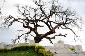 Árvore dos enforcados em Araxá - Imagem: Panoramio