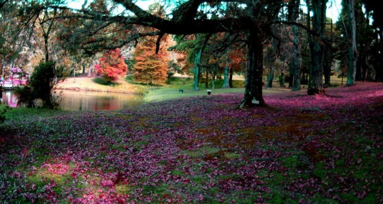 Horto Florestal Campos do Jordão
