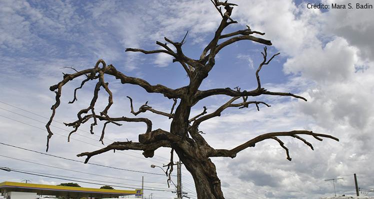 Árvore dos enforcados em Araxá – MG