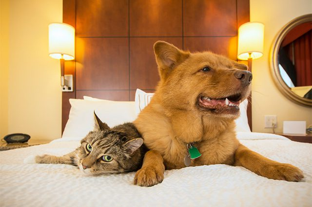 Foto: Cuteness.com