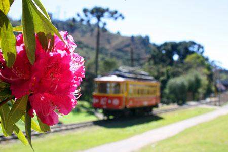 flores-na-avenida-2012